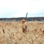 pheasant hunting south dakota